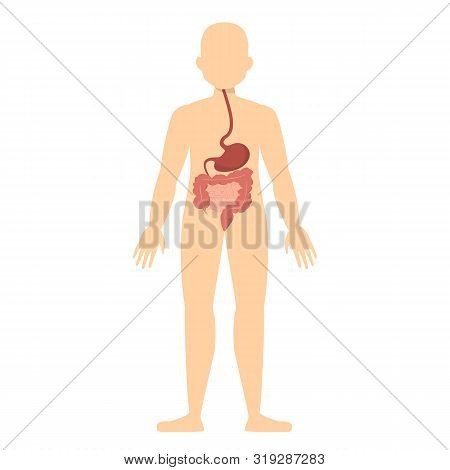 Human Silhouette And Digestive System. Stomach And Intestine