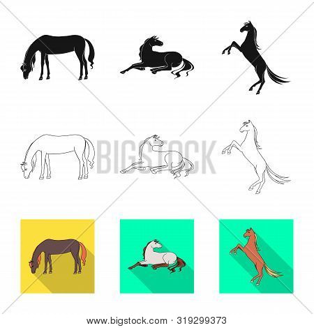 Vector Design Of Breed And Equestrian Sign. Set Of Breed And Mare Stock Vector Illustration.