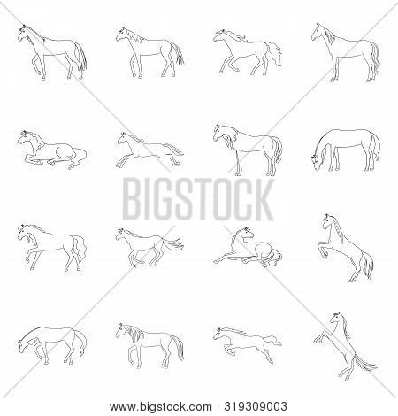 Isolated Object Of Stallion And Galloping Symbol. Set Of Stallion And Riding Vector Icon For Stock.