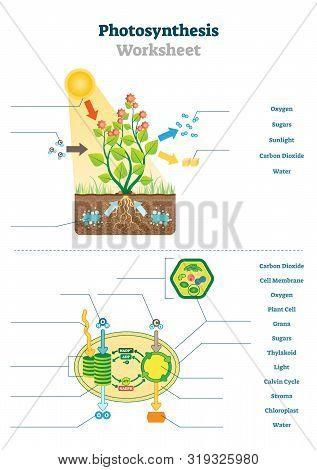 Photosynthesis Worksheet Vector Illustration. Educational Blank Oxygen Produce Process Scheme Templa