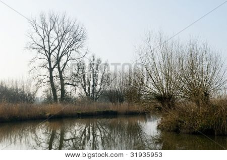 Dutch landscape with nature in the Biesbosch