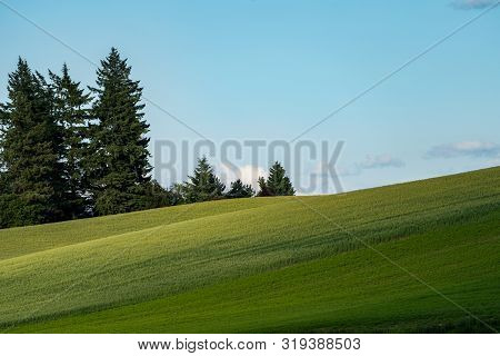Minimalist Landscape Composition Of Rolling Green Hills Of The Palouse In Washington State, With Tre