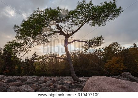 A Tree In Boulder Field Against The Sunset At Hickory Run State Park, Pennsylvania.