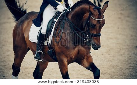 Equestrian Sport.the Leg Of The Rider In The Stirrup, Riding On A Brown Horse. Dressage Of Horses In