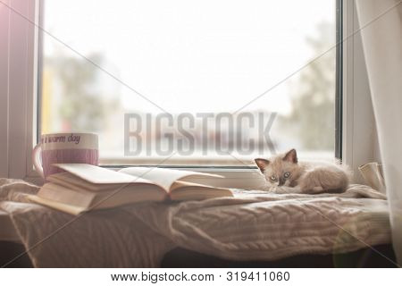 Kitten on a warm knitted sweater on the window sill. Cat at fall