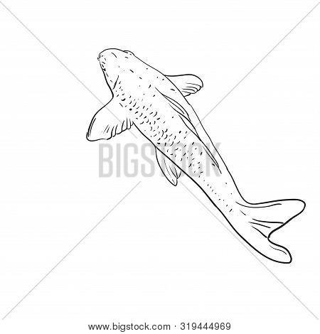 Koi Carp Nishikigoi Literally Brocaded Carp. Common Carp That Are Kept In Outdoor Koi Ponds Water Ga