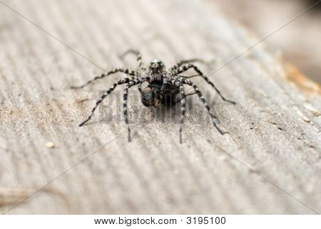 Big Spider Eat Fly (Macro Photo)