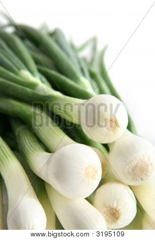 Big Fresh Onions On White Background