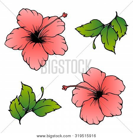Set Of Vector Hibiscus And Green Leaves. Isolated Hand Drawn Hibiscus, Flower With Gradient Pink Col