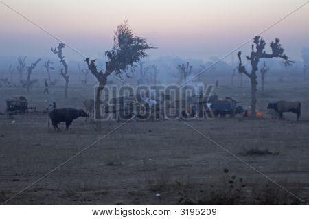 Dawn Over An Indian Livestock Fair