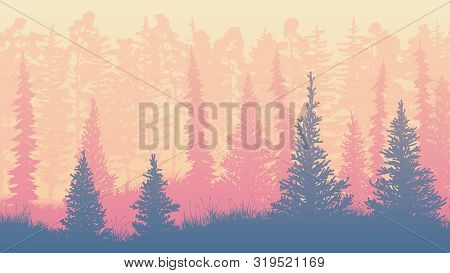 Horizontal Illustration Coniferous Forest Of Freestanding Spruce And Pine Trees On Grass.