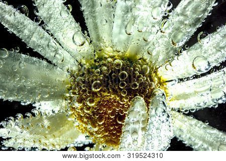Beautiful Daisy Flower Under Water Covered With Small Air Bubbles Macro Photo