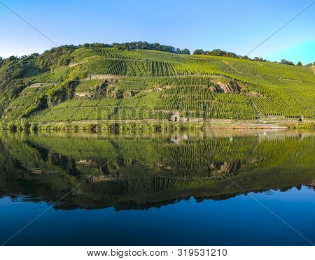 Famous Green Terraced Vineyards In Mosel River Valley, Germany, Production Of Quality White And Red