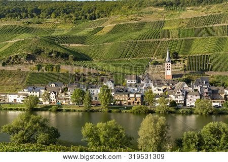 Landscape With Famous Green Terraced Vineyards In Mosel River Valley, Germany, Production Of Quality