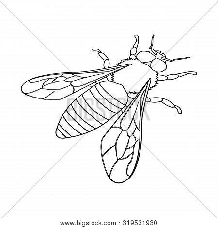Vector Design Of Bumblebee And Wild Symbol. Set Of Bumblebee And Biology Stock Symbol For Web.