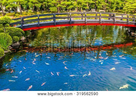 Koi Swimming In Pond Under Wooden Bridge With Red Trim Reflecting In Water With Manicured Evergreen