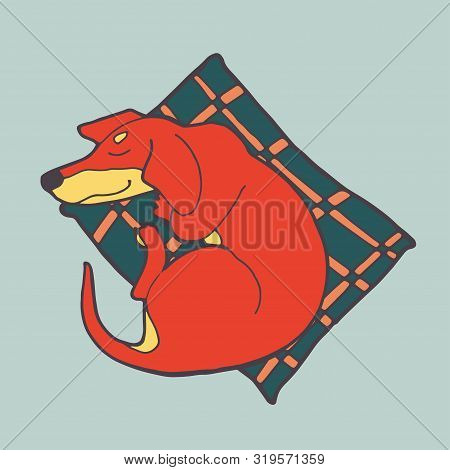 Illustration Of Cute Dog Dachshund. Nice Puppy For Greeting Card, Pet Shop Or Veterinary Clinics. Do