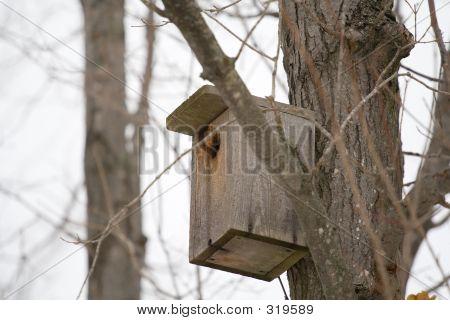 Homemade Birdhouse
