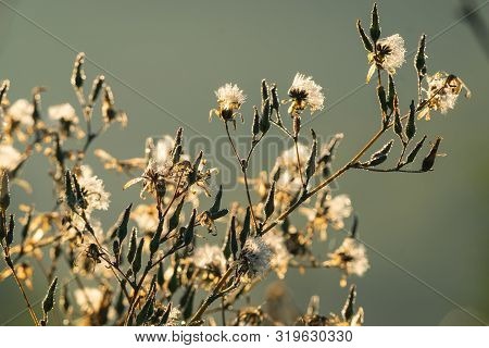 Close Up Of Meadow Flowers In Sunrise Nature Background. Nature Background Of Meadow Flowers In Sunr