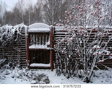 Wicket In The Fence In The Snow, Mountain Ash In The Snow, The First Snow