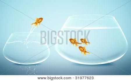 Goldfische springen in größeren Goldfischglas