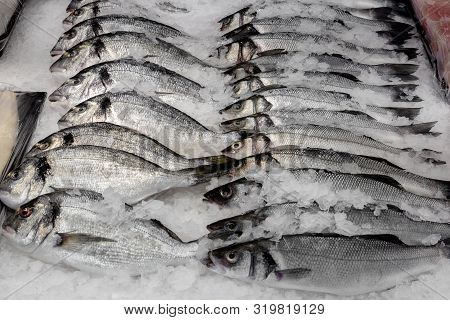 A Lot Of Seabass (dicentrarchus Labrax) On Ice At The Fish Market