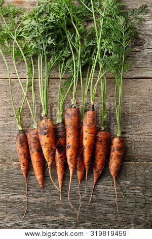 Fresh Unwashed Carrots With Greens On Old Wooden Planks, Top View