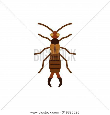 Earwig Single Flat Icon. Insect Simple Sign In Cartoon Style. Dermaptera Pictogram. Wildlife Symbol.