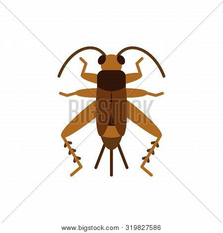 Cricket Bug Single Flat Icon. Grig Simple Sign In Cartoon Style. Insect Pictogram Wildlife Symbol. E