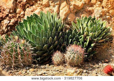 Beautiful Succulent And Cactus Garden In Cabo De Gata, Nijar, Almeria, Under The Sun