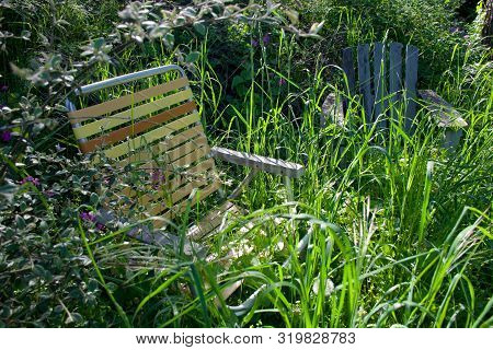 Lawn Chair And Adirondack Chair In Garden Obscured By Overgrown Grass And Shrubs, In Victoria, Briti
