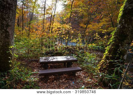 Wooden Bench In The Forest, Beautiful Fall Foliage Scene In Autumn Colors. Flowing River, Fallen Lea