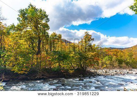 Oirase Stream In Sunny Day, Beautiful Fall Foliage Scene In Autumn Colors. Flowing River, Fallen Lea