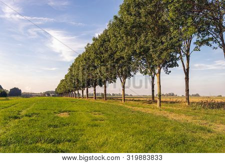Seemingly Endless Row Of Tall Trees. The Photo Was Taken Near The Village Of Hank In North Brabant,