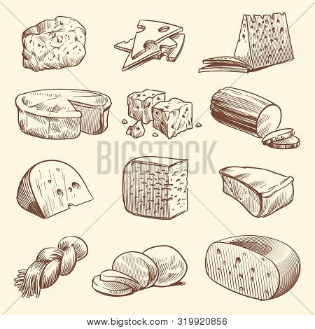 Hand Drawn Cheese. Various Types Of Cheeses. Tasty Brie, Mozzarella And Parmesan Appetizer Foods. Do