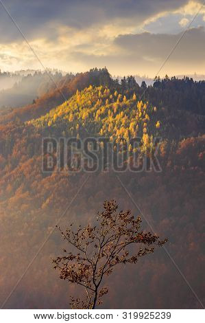 Autumnal Mountain Scenery At Foggy Sunrise. Lonely Tree In The Foreground. Cloudy Weather, Forests I