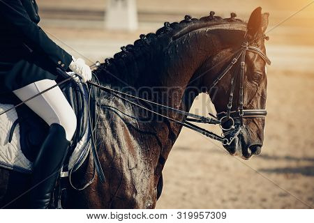 Equestrian Sport. Portrait Sports Brown Stallion In The Double Bridle. Dressage Of Horses In The Are
