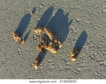 Light Brown Coyote Scat Close Up With Long Shadows