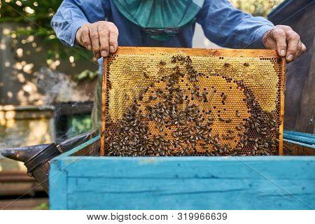 Process Of Harvesting Honey From Wooden Beehive Outdoors