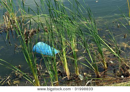 Unsightly Pond