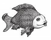 Ink drawing of a large carp with an enigmatic expression on her face. poster
