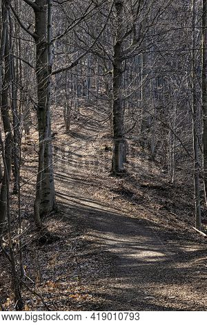 Tourist Path In Deciduous Forest, Big Fatra, Slovak Republic. Hiking Theme. Seasonal Natural Scene.