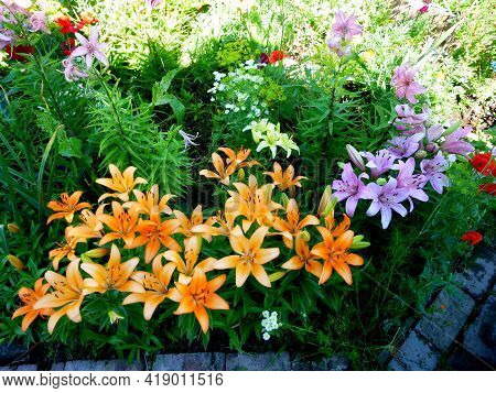 Blooming Flowers In A Garden. Young Flowers, Blooming Begins, Summer Day.