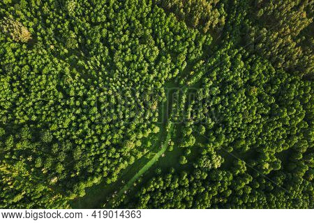 Belarus. Aerial View Of Green Small Bog Marsh Swamp Wetland In Green Forest Landscape In Summer Day.