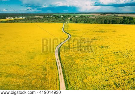 Aerial View Of Agricultural Landscape With Flowering Blooming Rapeseed, Oilseed In Field In Spring S