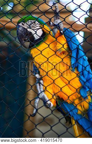 Ara Bird In The Cage . Exotic Bird In The Prison . Zoo Animal On The Cage