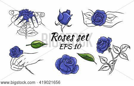 Blue Roses Set. Rose In Hands, Buds. Blue Roses And Line Stem. Line Style. Stickers. Vector Illustra