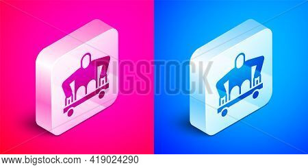 Isometric Man Without Legs Sitting Wheelchair Icon Isolated On Pink And Blue Background. Disability