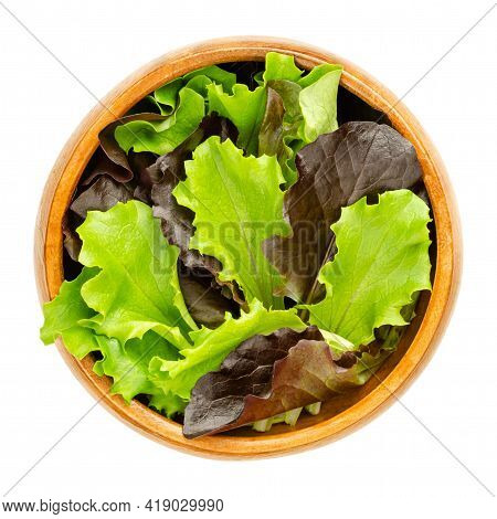 Loose Leaf Lettuce In A Wooden Bowl. Fresh Picked Green And Red Leaves Of Pluck Lettuce, Also Pick O