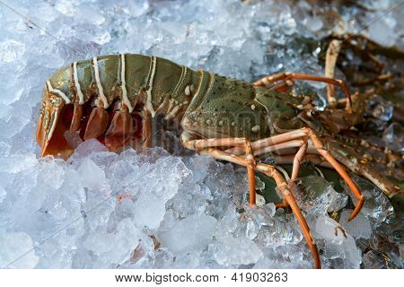 Fresh Lobster On Ice